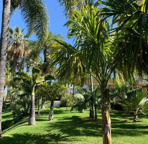 Bewertung der Grünanlage des Hotel Tigaiga, Tenerife, bezüglich CO² Bindung und Sauerstoffproduktion