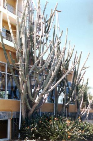 a1987-kaktus.jpg