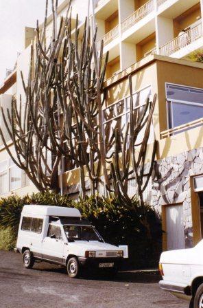 198510-cereus-peruvianus-cactus.jpg