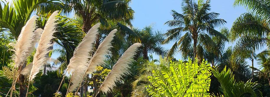 Novedades:  viajes a Canarias – requisitos COVID 19
